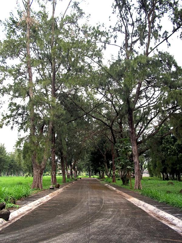 0114_trees