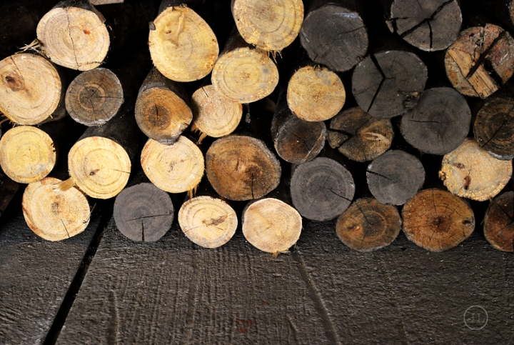 0825_choppedwoods